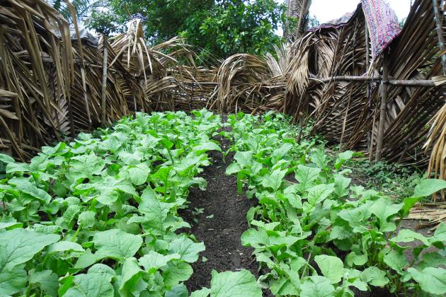 agroecologia huertos